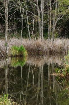 恵庭岳の湿地