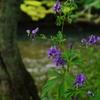 河畔に咲く花
