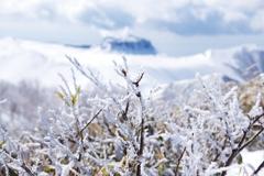 霧氷の頂上