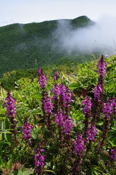 花の山から