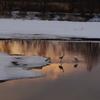 丹頂鶴のいる風景