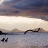 支笏湖の竜