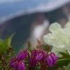 山を見る花