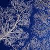 青い空に霧氷