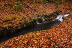 落ち葉を流れる