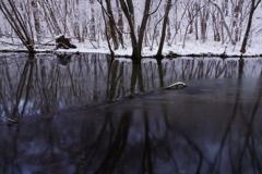木々を映す川