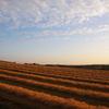 朝日の牧草