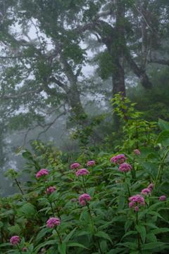 風雨の休息
