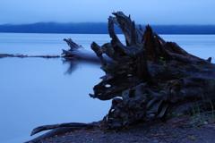 流木の河口