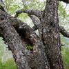 生きている木