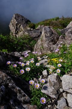 頂上に咲く花
