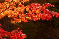 横谷渓谷紅葉