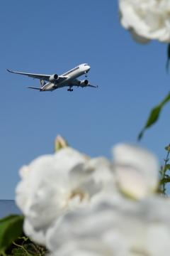 バラと飛行機