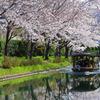 桜と十石船