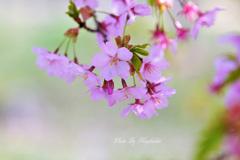 ♪春よ~~