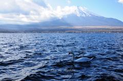 富士山と白鳥