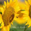 花から花~