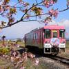 桜のヘッドマーク