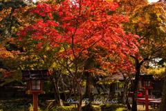 秋日和 2