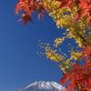 紅葉と富士山-2