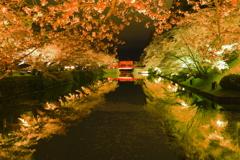 米沢城の夜桜