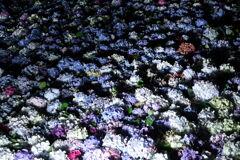 紫陽花池のライトアップ
