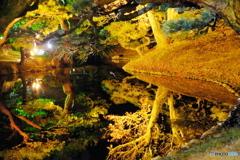 紅葉ライトアップ 栗林公園