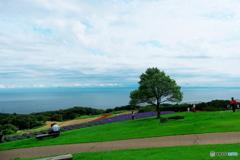 海の見える丘から