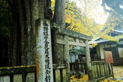 瑞応寺大銀杏