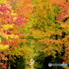 紅葉の並木道