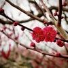 寒い日の大阪城梅林