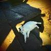 尼崎 猫のいる風景12