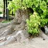 大きな樹の下に