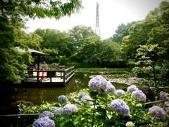 公園の小さな池にて