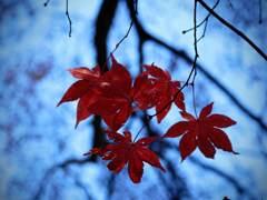 晩秋の箕面にて9