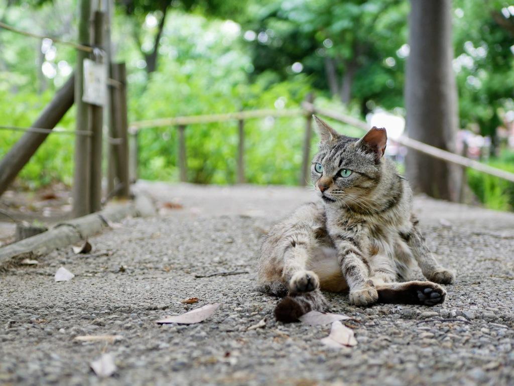 元浜緑地公園のニャンコ
