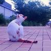 尼崎 猫のいる風景11
