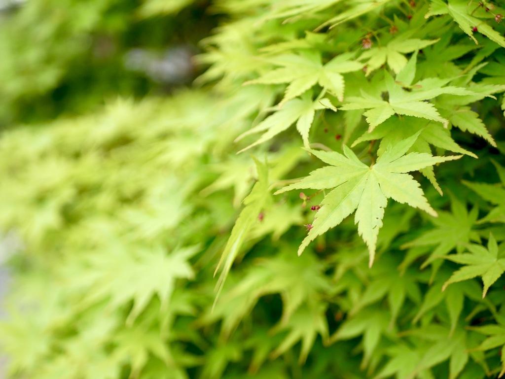 気持ちはいつも新緑の季節( ◠‿◠ )