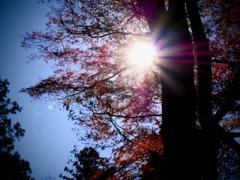 晩秋の箕面にて3