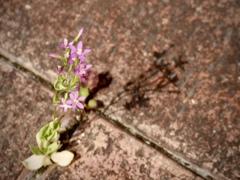 小さな花の影
