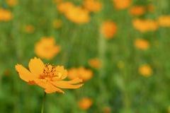 オレンジ色2