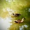 公園の小さな池にて3