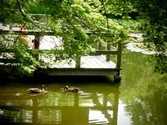公園の小さな池にて2