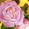 お花を飾って、、