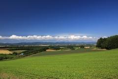 美瑛の丘 3