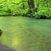 早朝の奥入瀬渓流 2