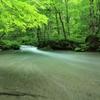 7月の奥入瀬渓流