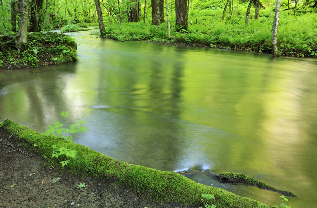 早朝の奥入瀬渓流 1