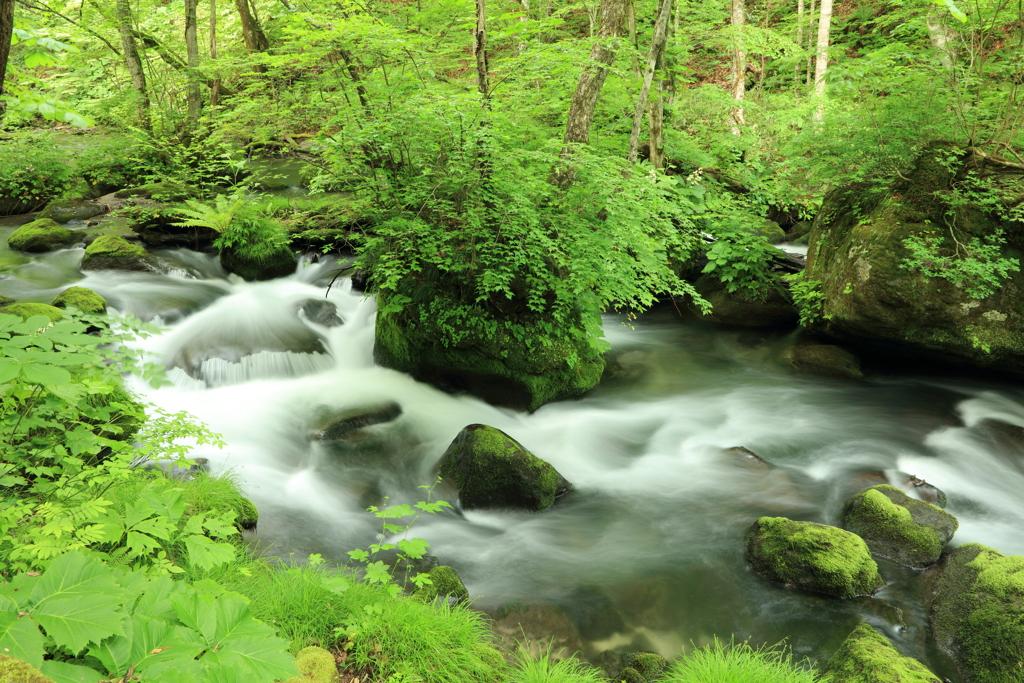 6月の奥入瀬渓流 2