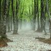 新緑の森 2